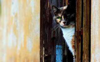 Советы при выборе дверцы для кота в дверь, обзор популярных моделей