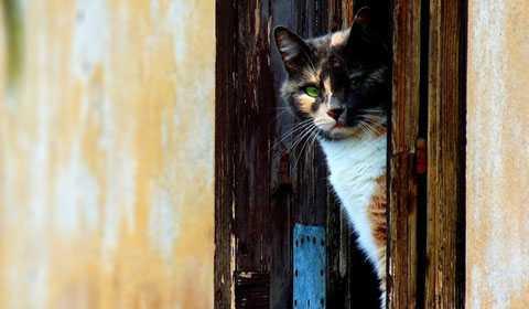 Обустройство двери для кошки в туалет