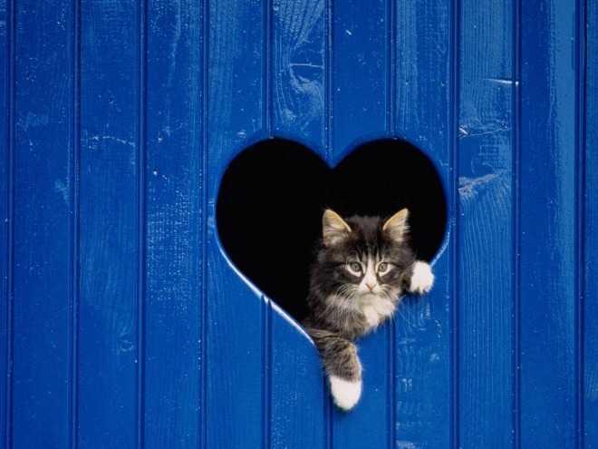 Как своими руками сделать кошачий лаз в двери: советы по изготовлению и установке дверцы для кошки