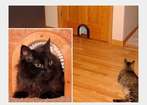 Дверь в туалет с отверстием для кота: вход для кошки