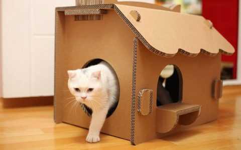 Дверь для кошки: варианты самостоятельного изготовления