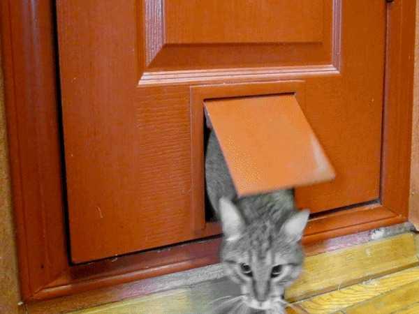 Установка дверцы для кошек в дверь