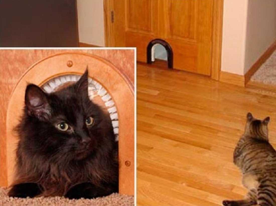 Дверь для кошки : типы проходов для животных